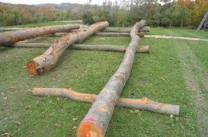 Sejem lesa
